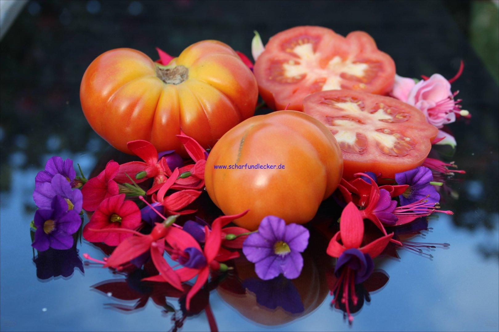 tomaten samen rote tomaten alte tomaten sorten samenechte tomaten. Black Bedroom Furniture Sets. Home Design Ideas
