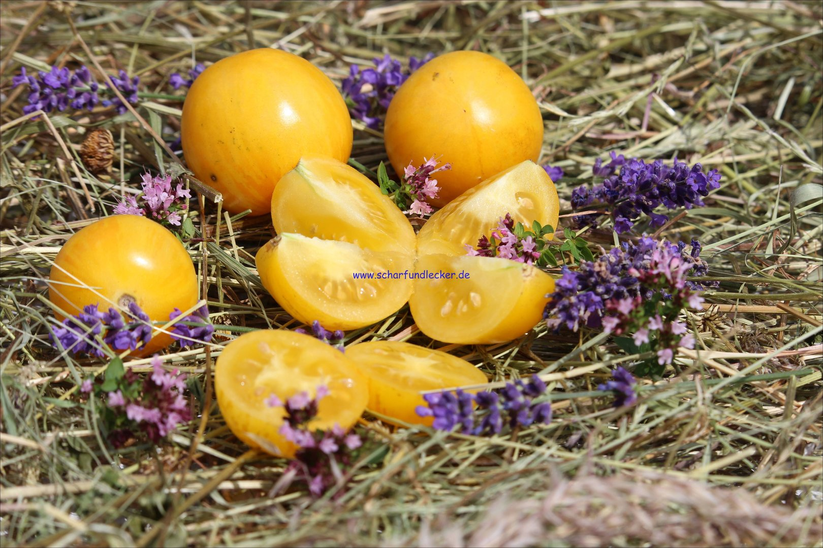 yellow vernissage tomatensamen kaufen bei scharf lecker. Black Bedroom Furniture Sets. Home Design Ideas