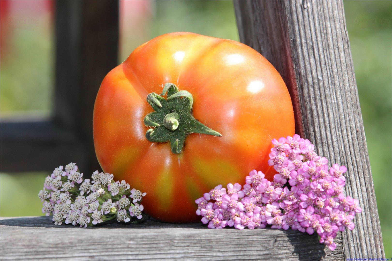 wolgograder eine alte russische tomate tomatensamen. Black Bedroom Furniture Sets. Home Design Ideas