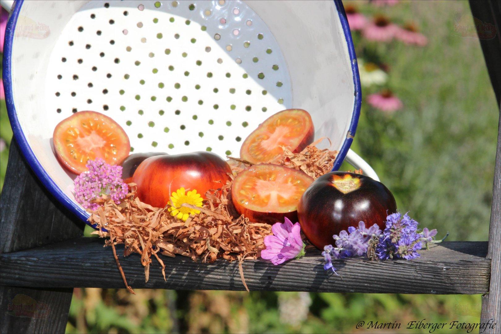 blaue tomaten tomatensamen jetzt saatgut kaufen. Black Bedroom Furniture Sets. Home Design Ideas