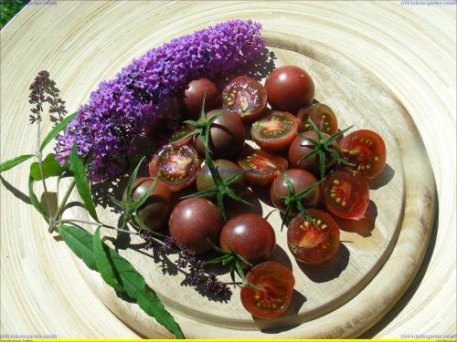 cherry tomaten pflanzen cherry tomaten aus dem garten foto bild pflanzen gem se im blumentopf. Black Bedroom Furniture Sets. Home Design Ideas