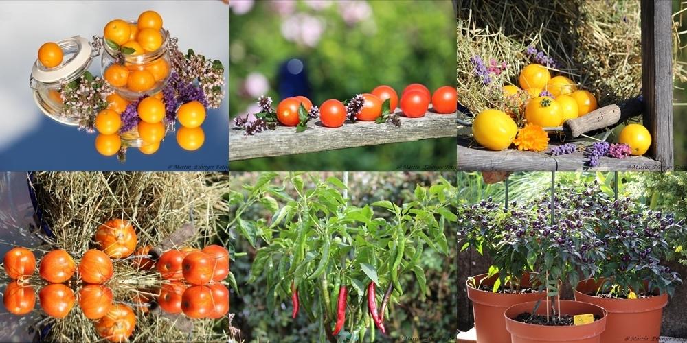 4 tomaten 2 dekorative chili f r den balkonanbau saatgut. Black Bedroom Furniture Sets. Home Design Ideas
